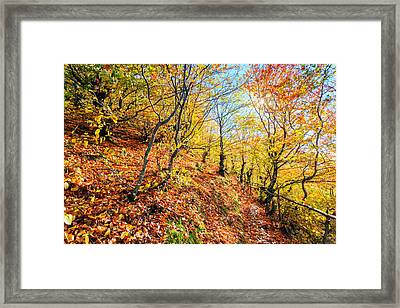 Way To The Chapel Framed Print by Evgeni Dinev