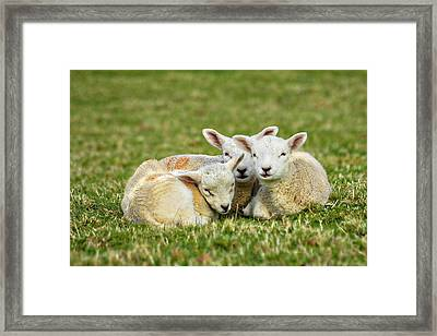 We Are Three Framed Print by Meirion Matthias