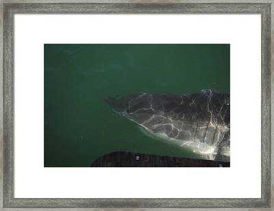 We Might Need A Bigger Boat Framed Print by Heather Jett