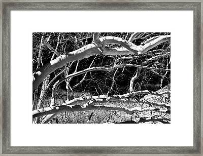 Web Of Branches Framed Print by John Rizzuto