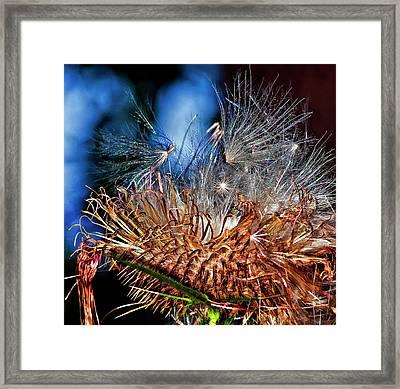 Weed Orgy Buzzed Framed Print by Steve Harrington