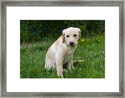 Weedeater Framed Print by Loree Johnson