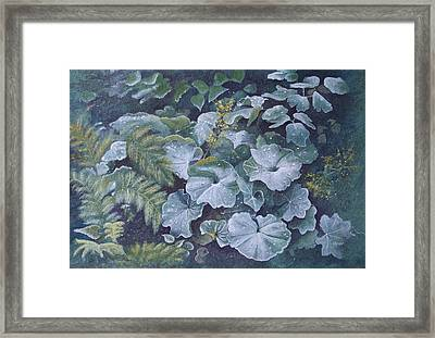 Weeping Ladies Mantle Framed Print by Patsy Sharpe