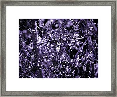 Welcome To The Purple Jungle Framed Print by Beth Akerman