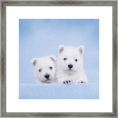 West Highland White Terrier Puppies Framed Print by Waldek Dabrowski