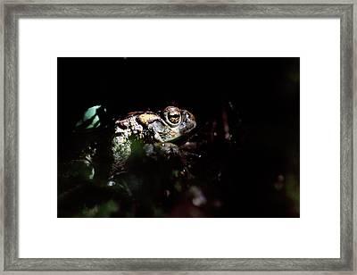 Western Toad Framed Print by Alan Sirulnikoff
