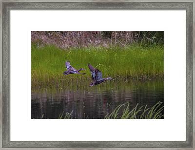 Wetland Wonders Iv Framed Print by Dave Kelly