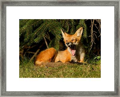 What A Day Framed Print by Mircea Costina Photography