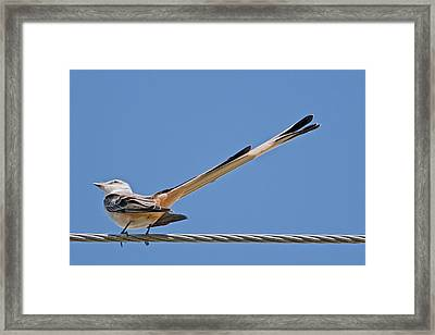What A Long Tail You Have Framed Print by Bonnie Barry