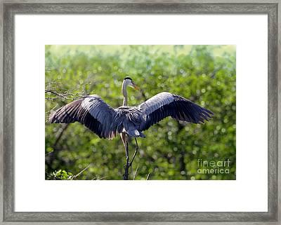 What A Wingspan Framed Print by Sabrina L Ryan