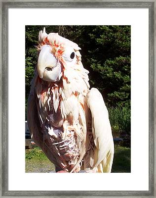 What Are You Looking At Framed Print by Susan Saver
