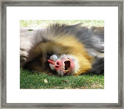 What Big Teeth You Have Framed Print by Feva  Fotos