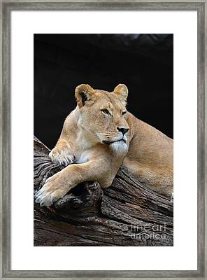 What Is Over There Framed Print by Eva Kaufman