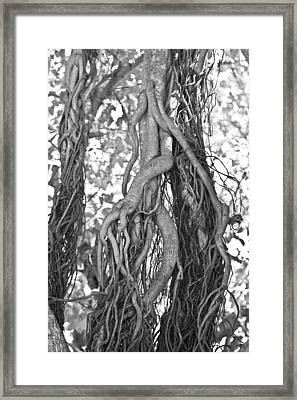 What Trees Know Framed Print by Betsy C Knapp