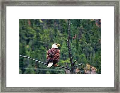 What Was That Framed Print by Don Mann