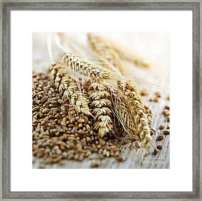 Wheat Ears And Grain Framed Print by Elena Elisseeva