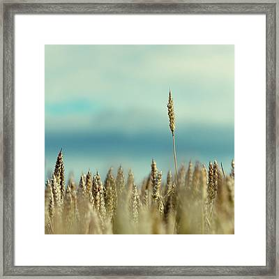 Wheat Field In Spain Framed Print by Iñaki De Luis