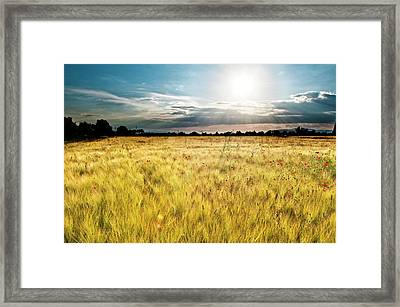 Wheat Field With Poppies Framed Print by Javier Sánchez