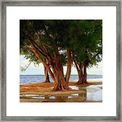 Whispering Trees Of Sanibel Framed Print by Karen Wiles