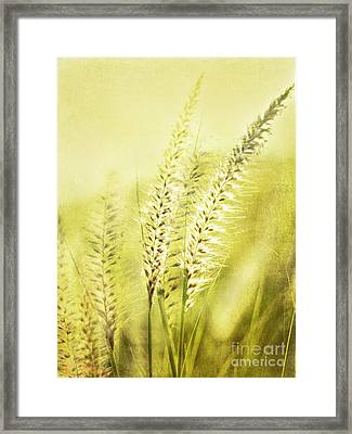 Whispers Framed Print by Linde Townsend