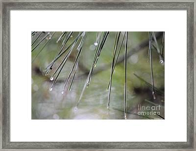 Whispers Of An Autumn Rain Framed Print by Maria Urso