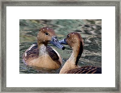 Whistling Ducks Framed Print by Paulette Thomas