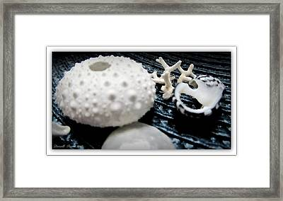 White And Blue  Framed Print by Danielle  Parent