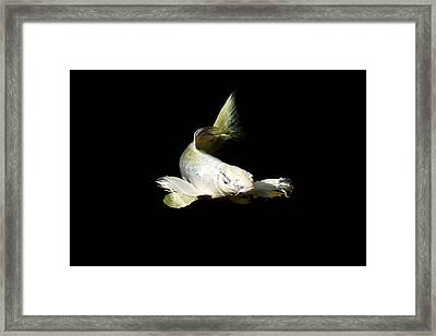 White Angel Framed Print by Don Mann