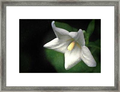 White Balloon Flower-faux Painting Framed Print by  Onyonet  Photo Studios