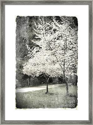 White Blooming Tree Framed Print by Danuta Bennett