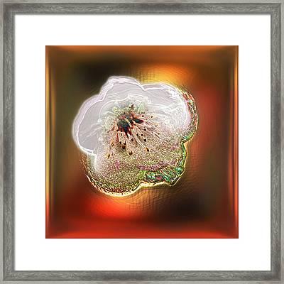 White Cherry Blossom Framed Print by Li   van Saathoff