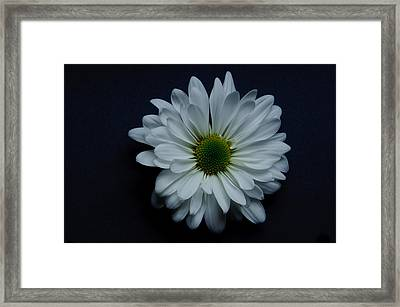 White Flower 1 Framed Print by Ron Smith