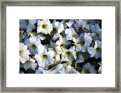 White Flowers At Dusk Framed Print by Sumit Mehndiratta
