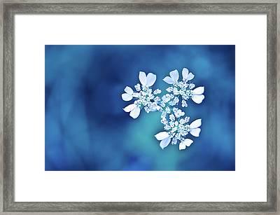 White Flowers In Blue Bokeh Framed Print by Alexandre Fundone