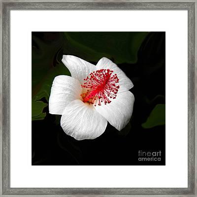 White Hibiscus Flower Framed Print by Rebecca Margraf