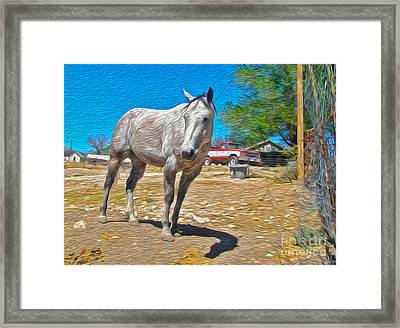 White Horse Framed Print by Gregory Dyer