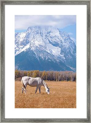White Horse In Teton National Park Wy Usa Framed Print by Chasing Light Photography Thomas Vela