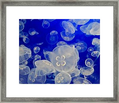 White Jellyfish Framed Print by Dorota Nowak
