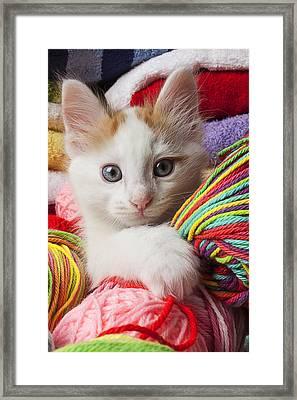 White Kitten Close Up Framed Print by Garry Gay