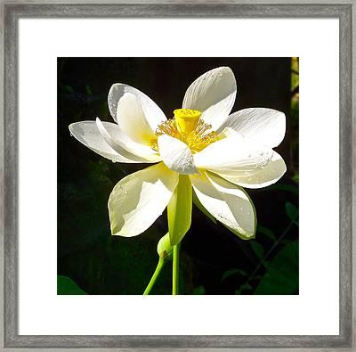 White Lotus Framed Print by Bryn Berg
