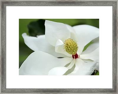 White Magnolia Framed Print by Sabrina L Ryan