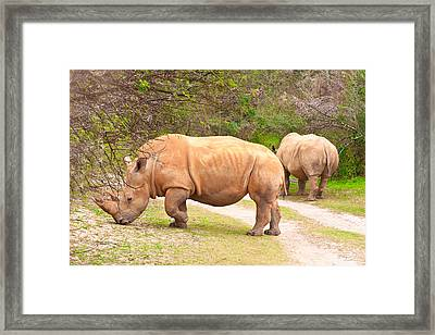 White Rhinoceros Framed Print by Tom Gowanlock