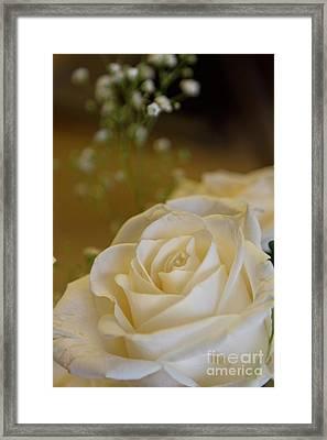 White Rose Framed Print by Carolyn Fox