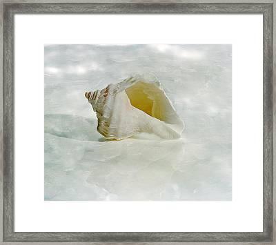 White Seashell Framed Print by Cindi Ressler