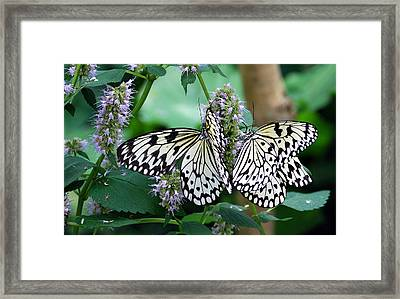White Framed Print by Skip Willits