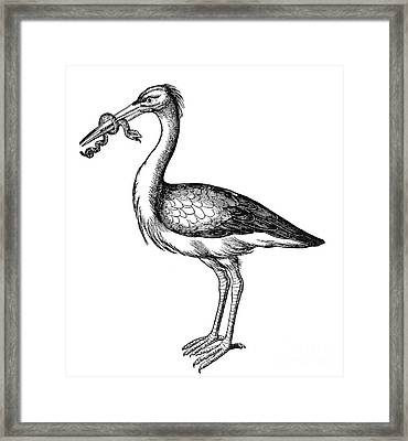 White Stork Framed Print by Granger