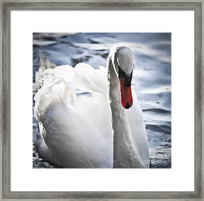 White Swan Framed Print by Elena Elisseeva