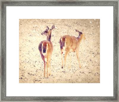 White Tails In The Snow Framed Print by Amy Tyler