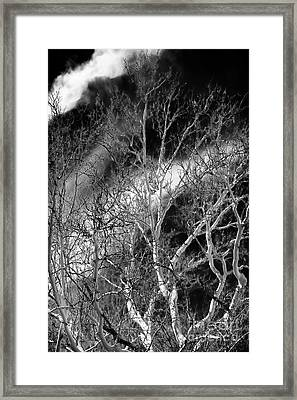White Tree Wave Framed Print by John Rizzuto