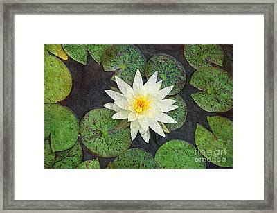 White Water Lily Framed Print by Andee Design